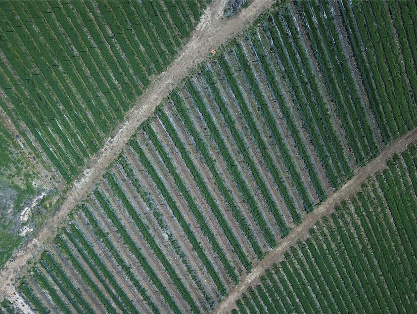 Obiettivi del progetto Soilution System Soave Verona Veneto